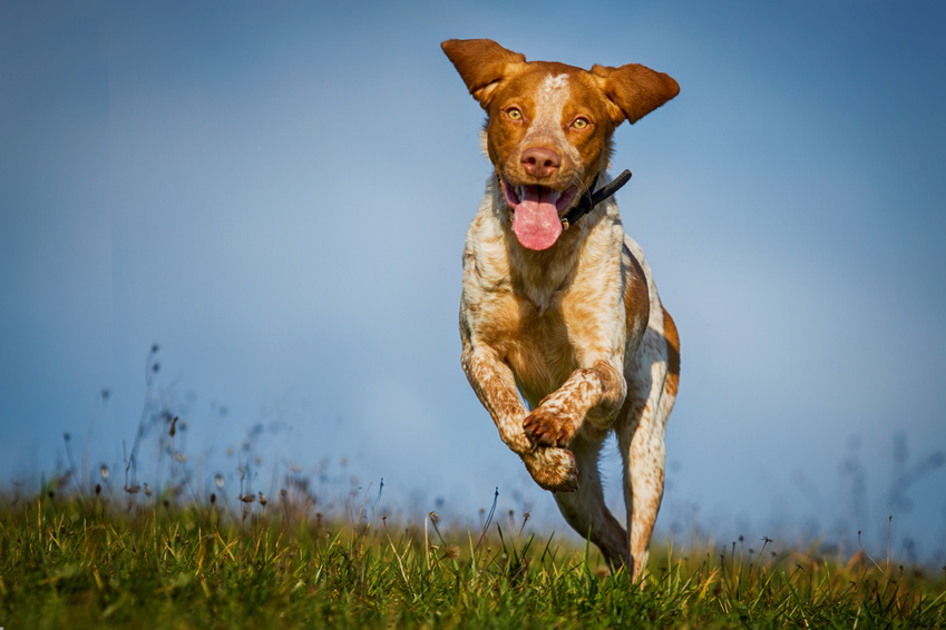 Happy dog business mojo